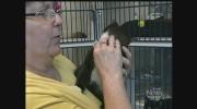 CTV Windsor: Cat blood transfusion