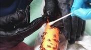 CTV Vancouver: Fly traps endanger bats