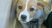 CTV News Channel: Back to school blues for pets