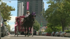 CTV Montreal:  Horse palace needs cash