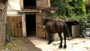Crowdfunding campaign to save 150-year-old horse p