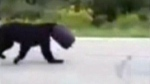 Bear freed after walking around with bucket on it'