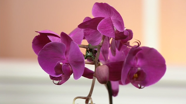 Keeping Orchids Alive