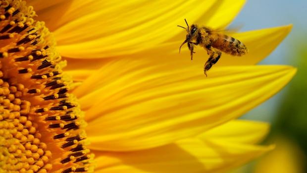 Bee farmers suing pesticide companies