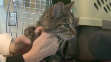 Canada AM's travel expert breaks down the rules when it comes to bringing pets along for the vacation.