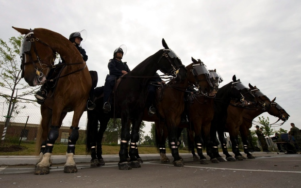 Who cleans up when a Toronto police horse defecates on the road ...