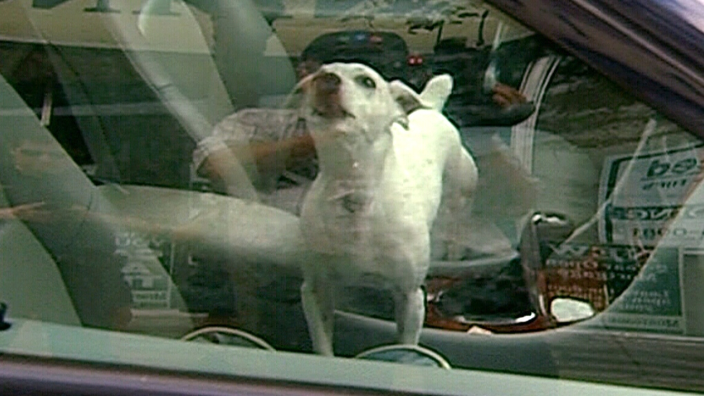 CTV Barrie: Dog left in car