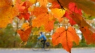 A cyclist rides through Gatineau Park as leaves change colour near Chelsea, Que. Wednesday October 10, 2012. (THE CANADIAN PRESS / Adrian Wyld)