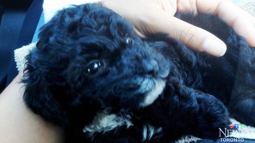 Consumer Alert: Kijiji puppy dies after purchase | CTV News