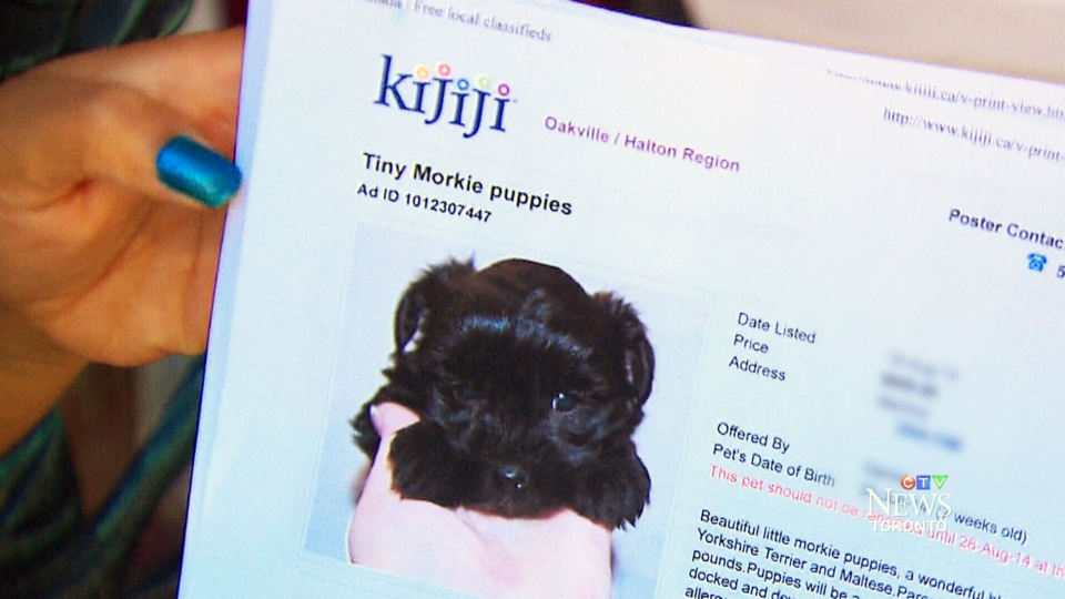 cb8a516d723e Puppy sold on Kijiji dies six days after purchase