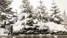 Calgary snow blast