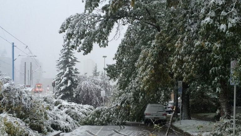 Summer snow storm downs trees in Calgary, Wednesday, Sept. 10, 2014 (Kimmiee_P / Twitter)