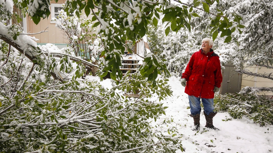 Jean Rivers inspects the damage to her trees as snow continues to fall in Cremona, Alta., Tuesday, Sept. 9, 2014. (Jeff McIntosh / THE CANADIAN PRESS)