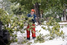 Worker cleans up branches in Calgary after snow