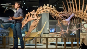 University of Chicago Paleontologists Paul C. Sereno speaks during an interview in front of a 50-foot life-size model of a Spinosaurus dinosaur at the National Geographic Society exhibit in Washington, Wednesday, Sept. 10, 2014. (AP / Pablo Martinez Monsivais)