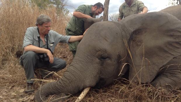 Elephant poaching Mozambique