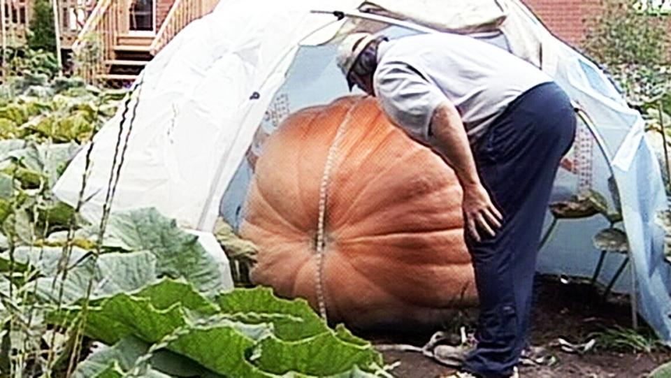 Ontario farmer hopes giant pumpkin breaks records | CTV News