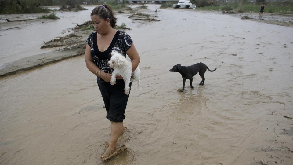 Local resident surveys damage from Hurricane Odile