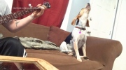Jeff's Video: All dog edition