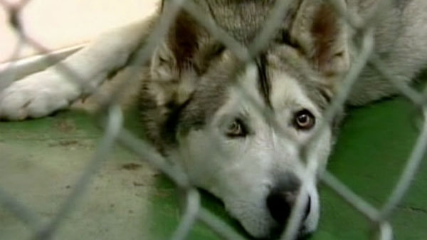 pet husky that killed newborn baby was trained