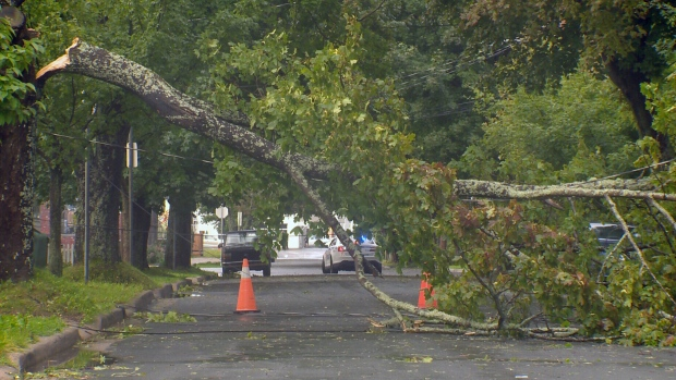 Heavy rain and strong winds downed trees, knocking out power across Nova Scotia. <br><br>