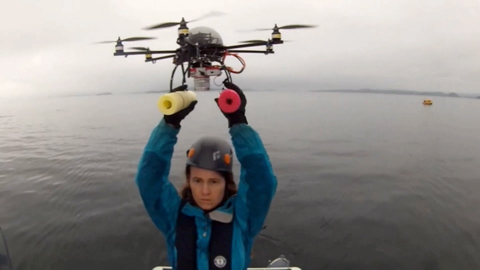 Researchers are going to new heights to monitor and help the recovery of killer whales off British Columbia's coast. They used a drone hexacopter to get a birds-eye view of the orca to determine whale's health. (The Canadian Press / HO-Vancouver Aquarium)