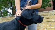 CTV Toronto: Owner reunited with stolen dog