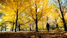 A man walks through the fall leaves at High Park in Toronto on Monday, Oct. 28, 2013. THE CANADIAN PRESS/Nathan Denette
