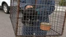 Trapped cat, transit bus, kitten rescue, cat rescu