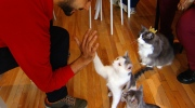 CTV National News: Purr-fect atmosphere