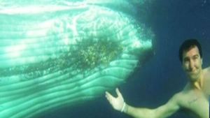 Australian couple swims with whales
