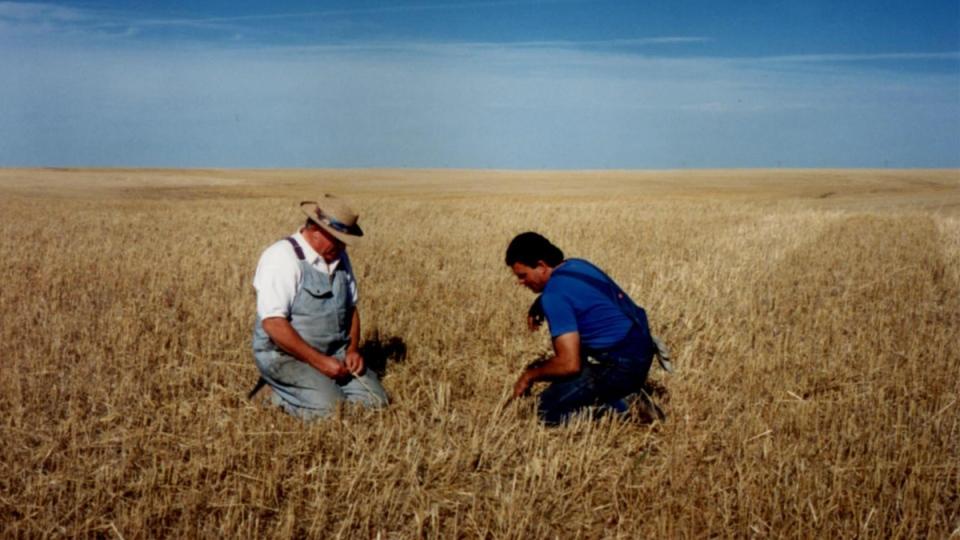 A grain field on a farm in Radville, Sask.