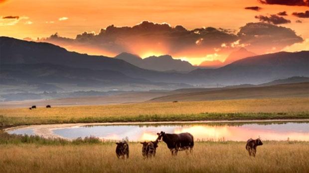 Waldron Ranch
