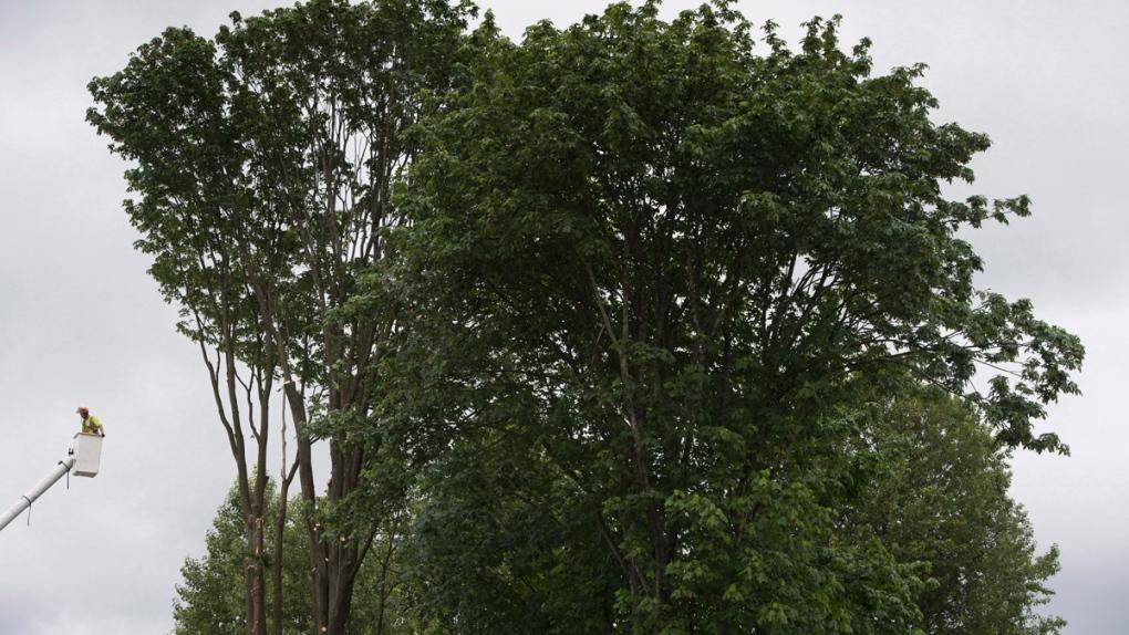 UBC putting together giant tree database