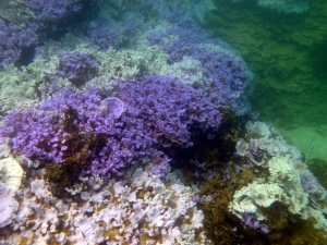 Warmer water causing coral bleaching in pristine atolls northwest of Hawaii
