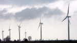 Wind turbines are shown at the opening of a 44-turbine wind farm near Port Alma, Ont., near the shores of Lake Erie, Thursday, Nov. 13, 2008. (The Canadian Press/Dave Chidley)