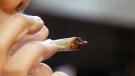 CTV Toronto: Legalizing marijuana