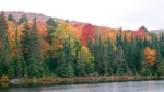 Brightly coloured trees in Ontario's Algonquin Park, Oct. 5, 2014. (MyNews / Lucy Hagan)