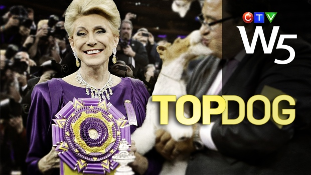 Top Dog: A Canadian judges the biggest dog show