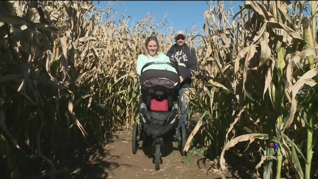 CTV Atlantic: Corn maze in Truro, N S  | CTV News Atlantic