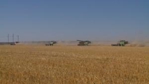 Syngenta settles U.S. farmer lawsuits in China corn trade case