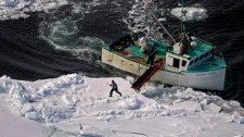 A hunter heads towards a harp seal during the annual East Coast seal hunt in the southern Gulf of St. Lawrence around Quebec's Iles de la Madeleine, March 25, 2009. (Andrew Vaughan / THE CANADIAN PRESS)