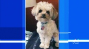 CTV Ottawa: Dog stolen from parked car