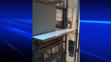 The University of British Columbia is under investigation by the BC SPCA for allegations that monkeys there are being subjected to experiments that cross the line. Thursday, March 8, 2012. Vancouver, B.C. (CTV)