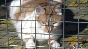 CTV Kitchener: Caring for feline friends