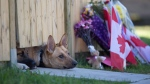 Dogs peek out from under a gate at the Cirillo family home in Hamilton, Ontario near flowers and flags that have been left on Thursday, Oct. 23, 2014. (Peter Power / THE CANADIAN PRESS)