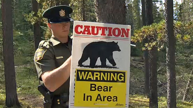 Bear Warning Issued For Areas In And Around Banff Ctv