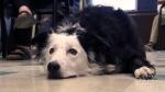 CTV Atlantic: Teacher's pet helps students