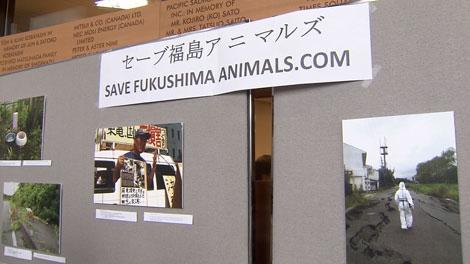 Save Fukushima Animals wants to rescue pets that were left behind in Fukushima after the tsunami hit last year. Mar. 11, 2012. (CTV)