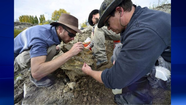 Mammoth tusk, skull found
